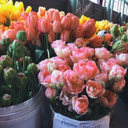 2nd day going to Pike Place Market. Beautiful Spring Tulips. Seattle is the best city with flowers, here in Chicago, our flowers aren't the best quality and very overpriced!